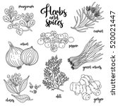 spices and herbs vector set to... | Shutterstock .eps vector #520021447