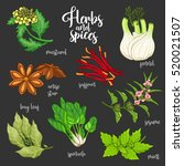 spices and herbs vector set to... | Shutterstock .eps vector #520021507