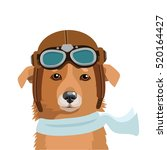 cute dog pilot isolated in...   Shutterstock .eps vector #520164427