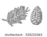 pine cone and branch of fir... | Shutterstock .eps vector #520231063