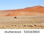 Oryx In Namibian Desert ...