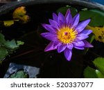 Violet Lotus Flower   Mobile...