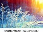 winter scene .frozenned flower ....   Shutterstock . vector #520340887