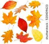 collection of autumn leaves on... | Shutterstock . vector #520409623