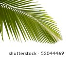 leaves of palm tree isolated on ... | Shutterstock . vector #52044469
