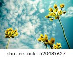 view from below on yellow... | Shutterstock . vector #520489627
