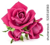 Stock photo pink rose flower bouquet isolated on white background cutout 520518583