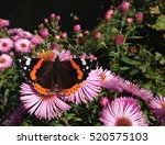 red admiral butterfly | Shutterstock . vector #520575103
