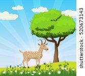 Goat Grazing In A Meadow  Tree...