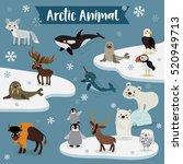 arctic animals cartoon with