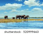 Chobe National Park In Botswan...
