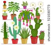 blooming cactus. exotic flowers ... | Shutterstock .eps vector #521030773