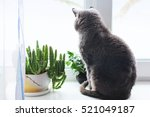The Cat Sits On A Window. Cat...