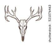 stylized deer skull sketch hand ... | Shutterstock .eps vector #521076463