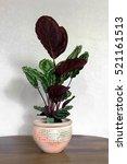 indoor plants | Shutterstock . vector #521161513