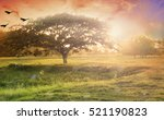 nature background concept ... | Shutterstock . vector #521190823