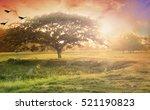 nature background concept ... | Shutterstock . vector #521190823