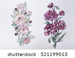 sketch of beautiful flowers on...   Shutterstock . vector #521199013