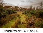 Autumn Afternoon Landscape On...