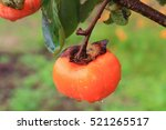 A Ripe Persimmon Fruit Hangin...