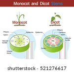 A Picture Comparing Monocot An...