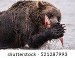 A Bear Is Having Lunch