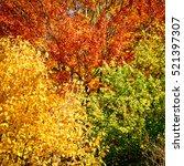 autumn forest background....   Shutterstock . vector #521397307