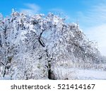 the apple tree in the snow.... | Shutterstock . vector #521414167