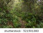 sopo  cundinamarca  colombia ... | Shutterstock . vector #521501383