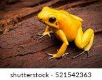 Poisonous Frog  Poison Dartfro...