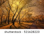 old alley in the park... | Shutterstock . vector #521628223