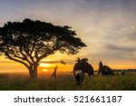 thai farmers and elephants... | Shutterstock . vector #521661187