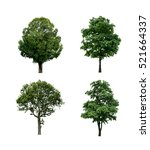 collection of tree isolated on... | Shutterstock . vector #521664337