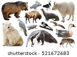 set of brown bear and other... | Shutterstock . vector #521672683
