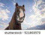 Funny Close Up Horse Portrait....