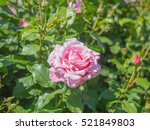 flowers | Shutterstock . vector #521849803