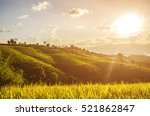 soft focus of rice farm... | Shutterstock . vector #521862847