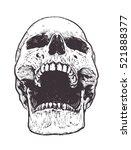 Anatomic Skull Vector Art....