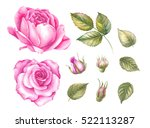 Vintage set of blooming roses. Watercolor botanical illustration of a rose. Postcard for congratulations, wedding or invitation. Textile design
