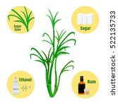 sugar cane and products of cane.... | Shutterstock .eps vector #522135733