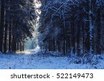 Winter Forest Glade In The...