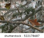 realistic forest camouflage.... | Shutterstock . vector #522178687
