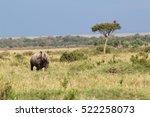 Black Rhino In Masai Mara ...