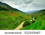 rice field shapes like rice... | Shutterstock . vector #522355687