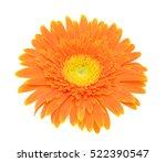 Beautiful Orange Gerbera Flowe...