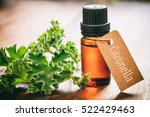 fresh citronella leaves and oil ... | Shutterstock . vector #522429463