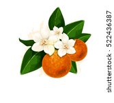 vector fleur d'orange... | Shutterstock .eps vector #522436387