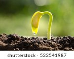 seedling agriculture and new... | Shutterstock . vector #522541987