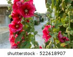 Hollyhock Flowers At The Frenc...