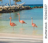 Flamingos On The Aruba Beach....